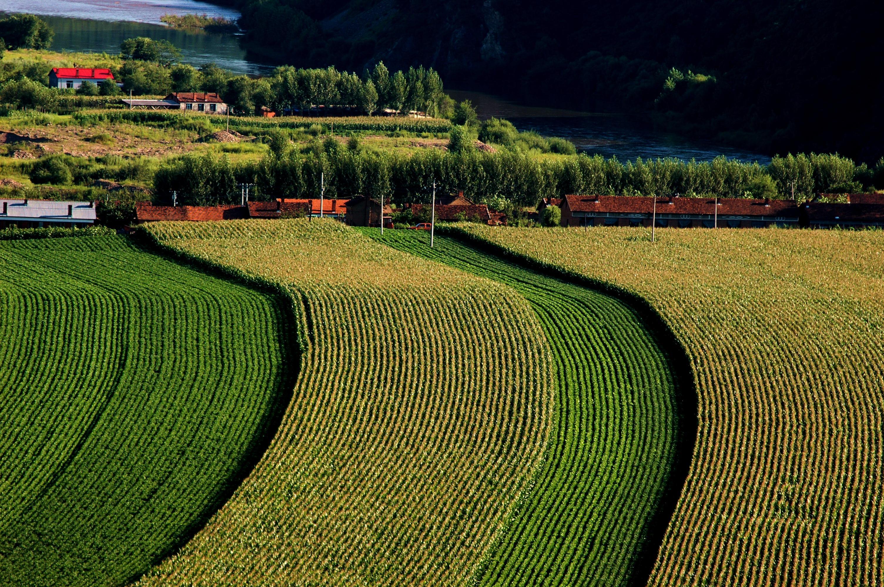 农业合作图片素材